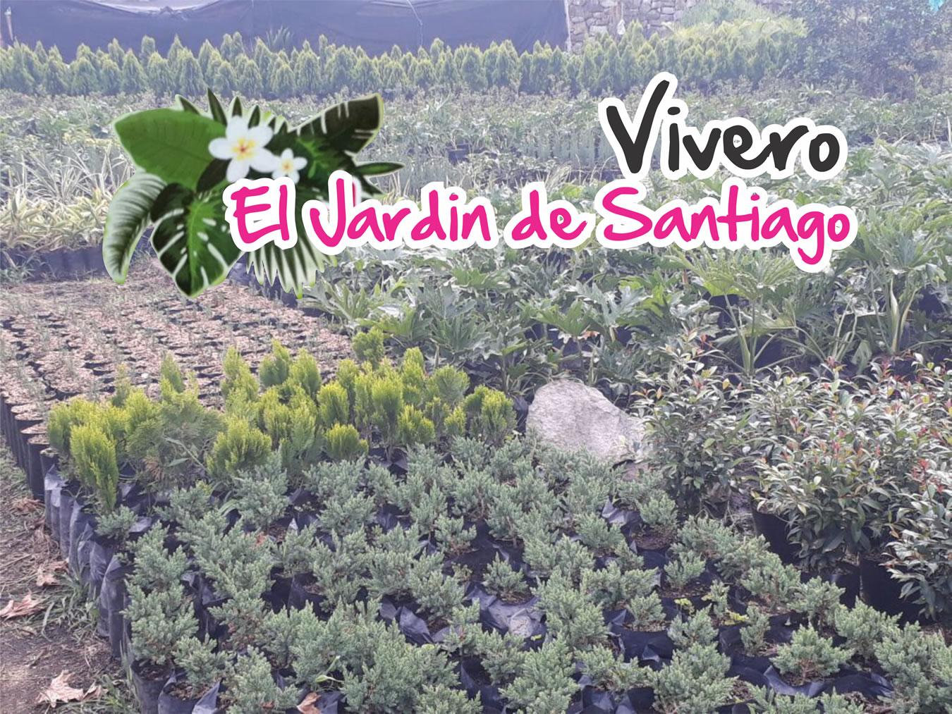 Pagina oficial vivero el jardin de santiago for Vivero tu jardin