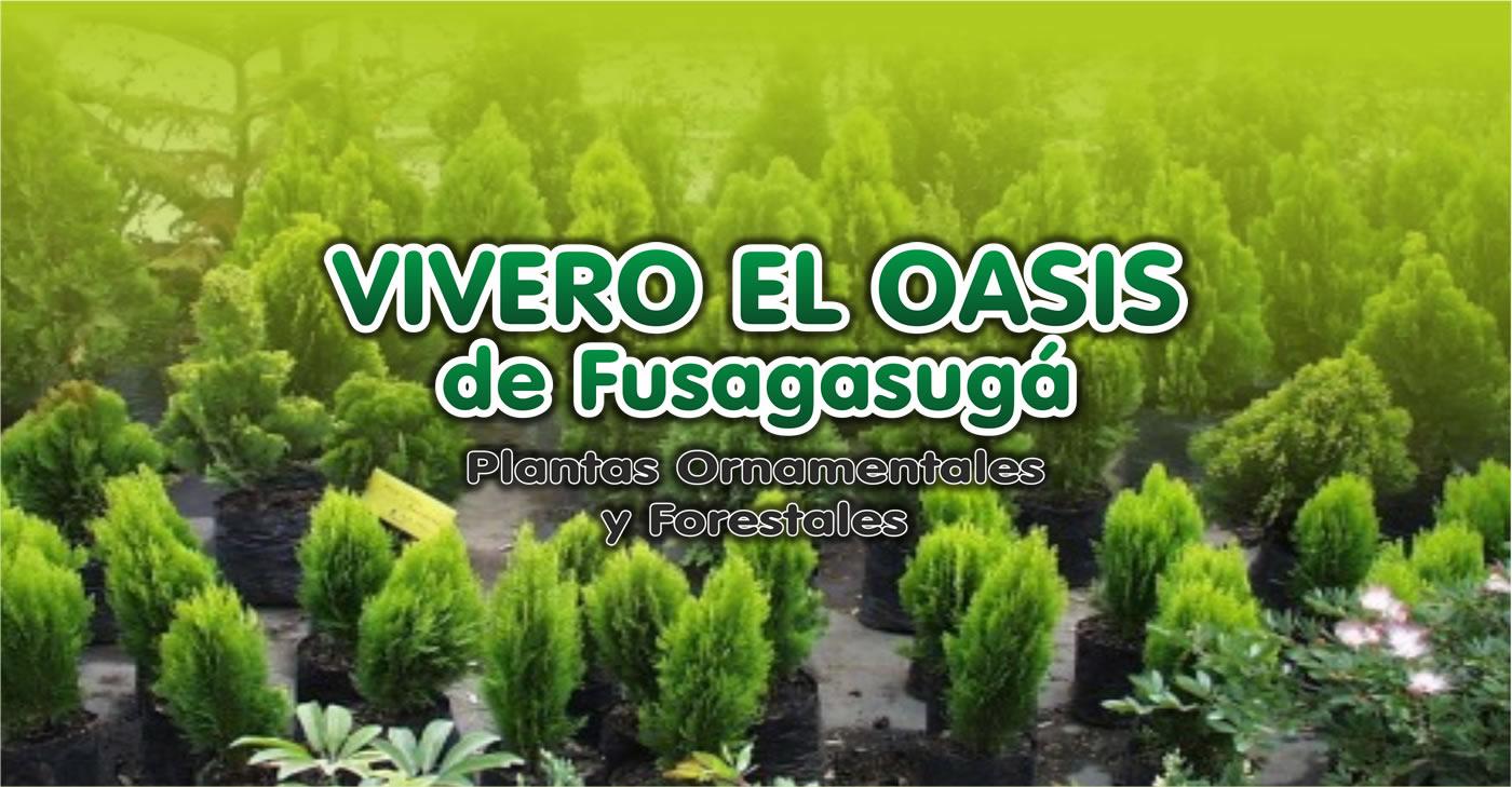 Pagina oficial vivero el oasis de fusagasuga for Viveros forestales en colombia